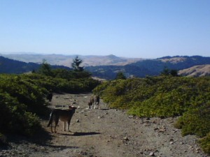 Off leash w/Wyatt, Avery, and Bandit on ridge trail fire road ~ Woodacre, CA 2012
