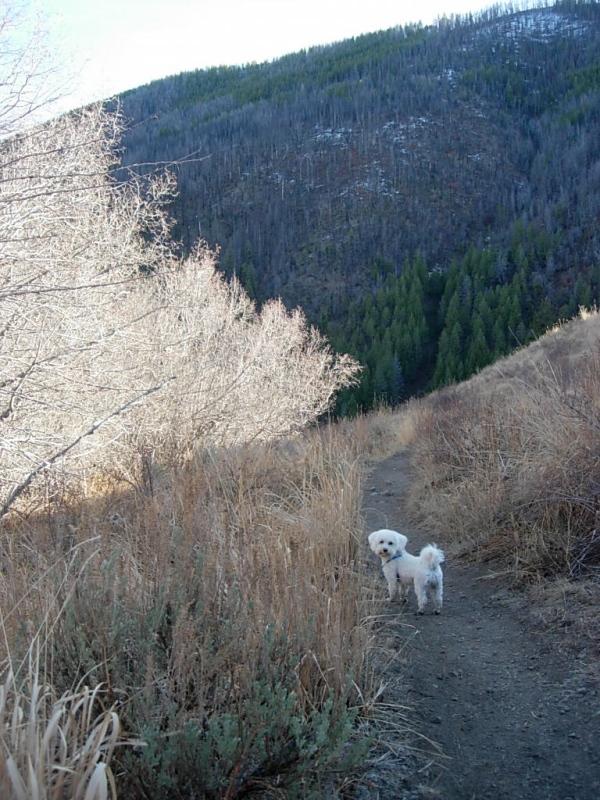 Adams Gulch loop trail ~ 11/4 ~ 6