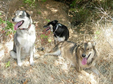 Avery, Wyatt, and Bandit ~ along the way on a hot day trip; Marin County, CA 2012