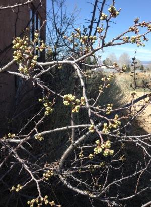 dry winter spring